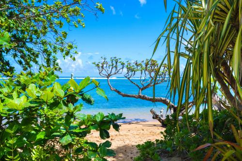 Anini Ohana Hale - Kilauea, HI Vacation Rental