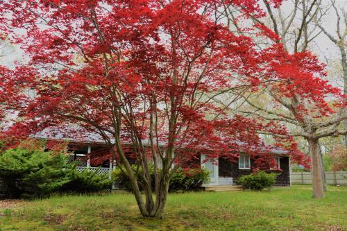 Barbara's Place - Oak Bluffs, MA Vacation Rental