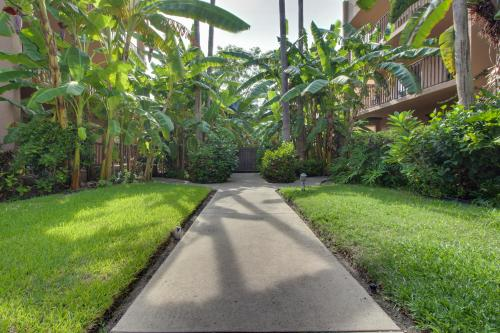 Beachview Condominiums: Palm Tree Pathway (#303) -  Vacation Rental - Photo 1
