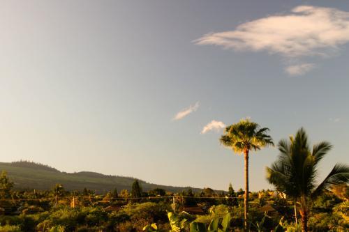 Maui Banyan Q409A & Q409B -  Vacation Rental - Photo 1