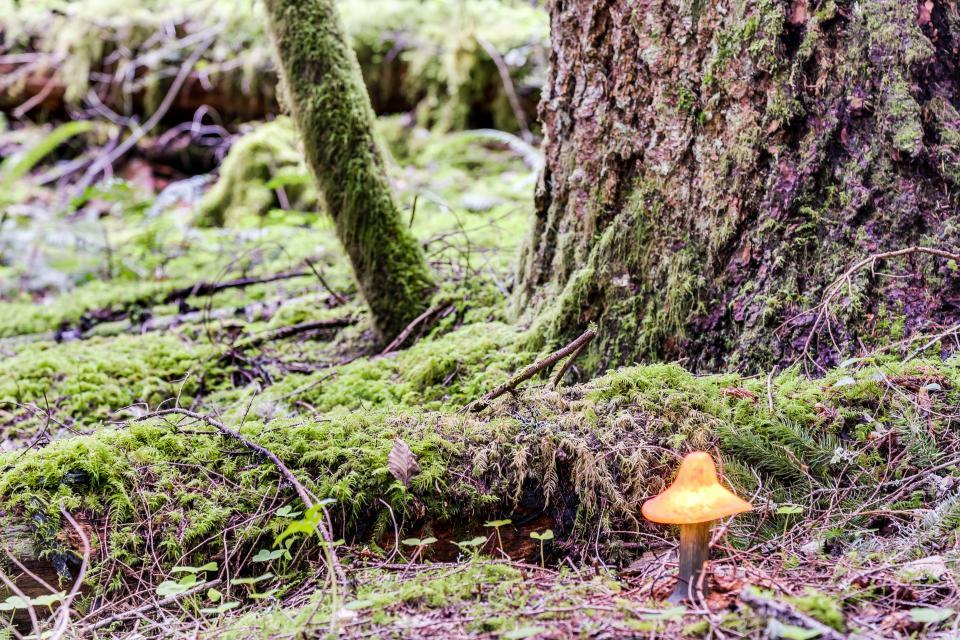 Swedish Stuga Vacation Rental - Rhododendron Vacation Rental - Photo 26