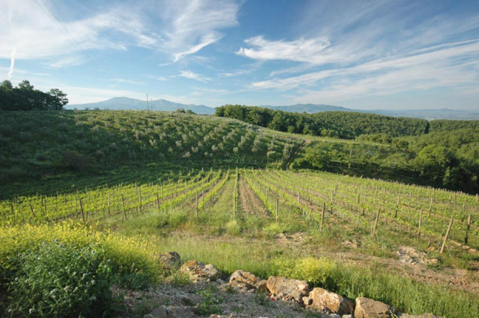Vine Brunello - Florence Vacation Rental - Photo 32