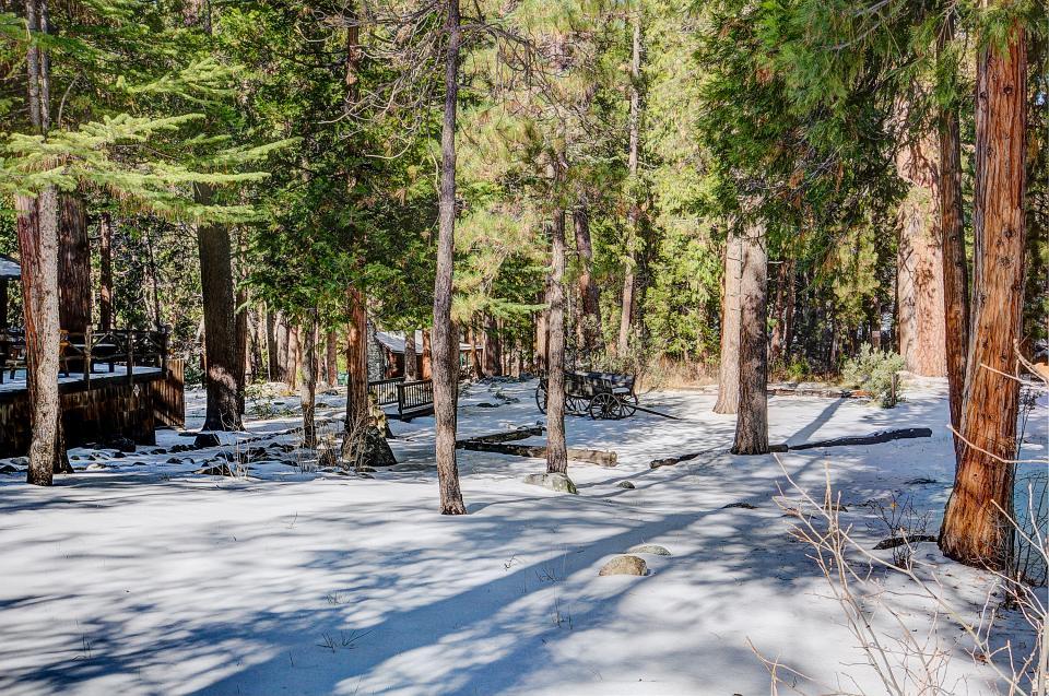 Twin Tree Lodge - Idyllwild Vacation Rental - Photo 25