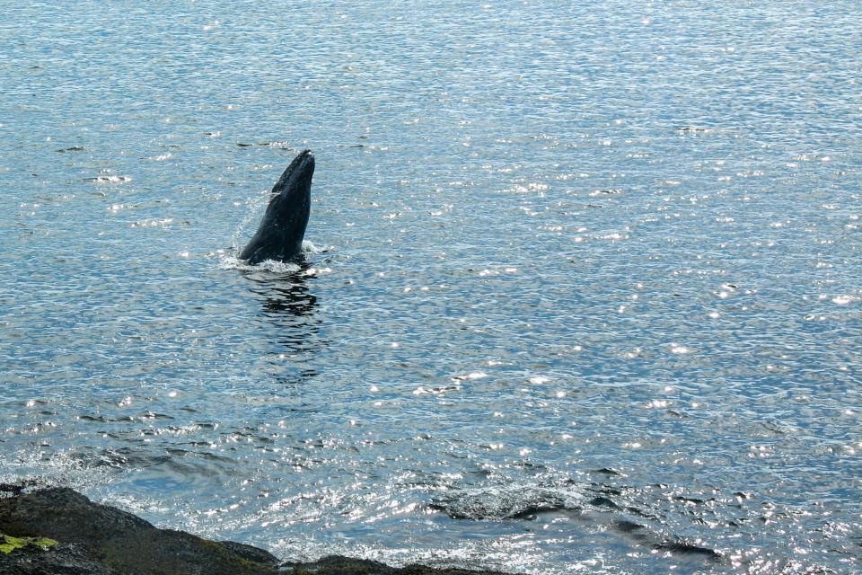 Ocean Garden Suite - Depoe Bay Vacation Rental - Photo 31