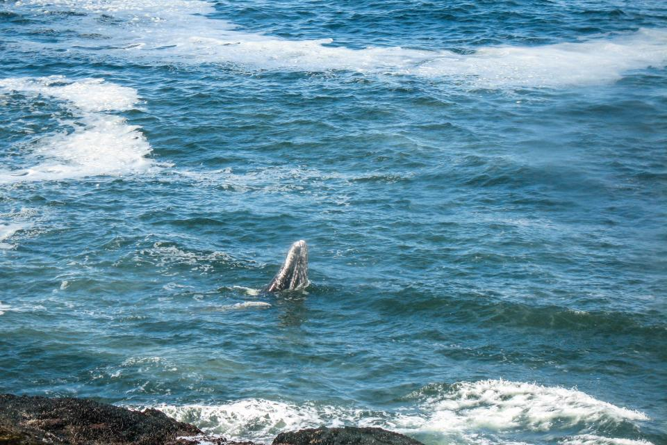 Ocean Garden and Sea Rose Suites - Depoe Bay Vacation Rental - Photo 35
