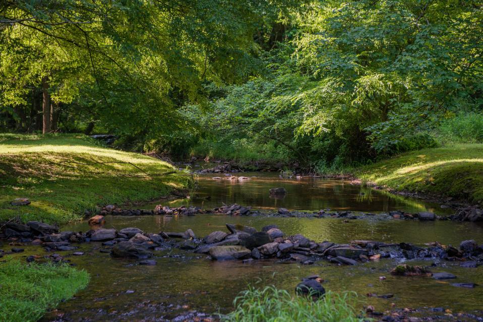 Wilderness Lodge - Ellijay Vacation Rental - Photo 57