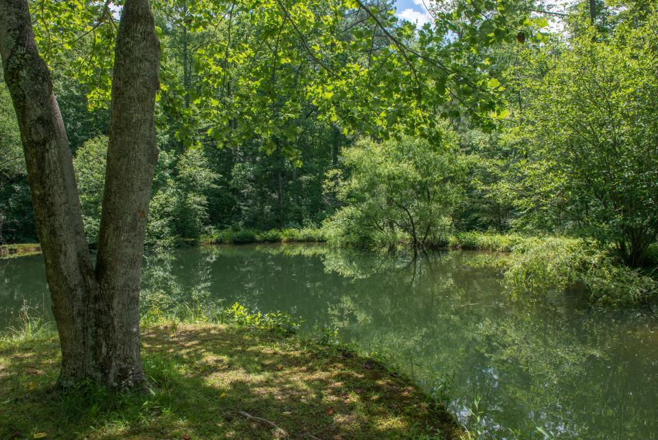 Weeks Creek Lodge - Blue Ridge Vacation Rental - Photo 3