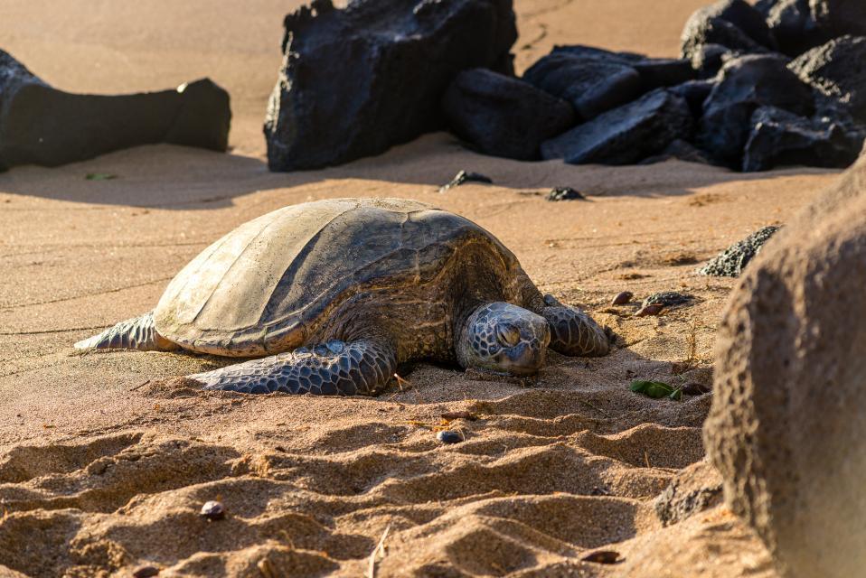 Maui Kaanapali Villas 295 - Lahaina Vacation Rental - Photo 40