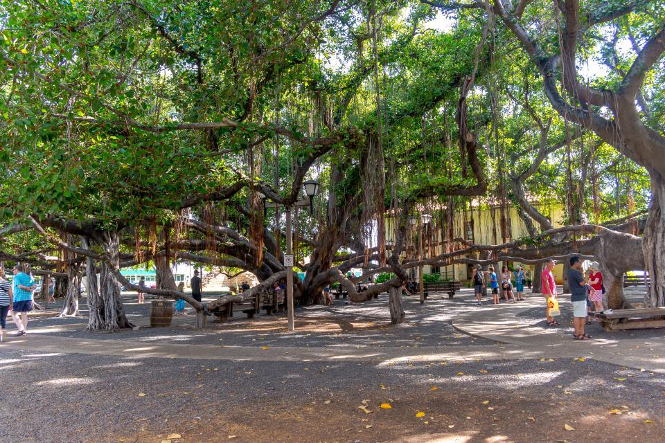 Maui Kaanapali Villas 295 - Lahaina Vacation Rental - Photo 43