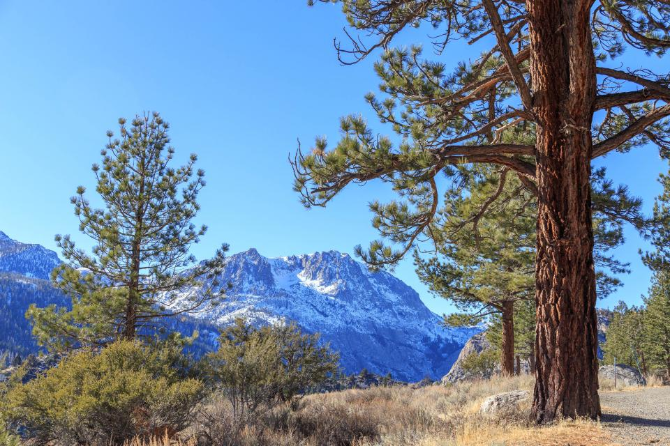Silver Meadow House - June Lake Vacation Rental - Photo 33