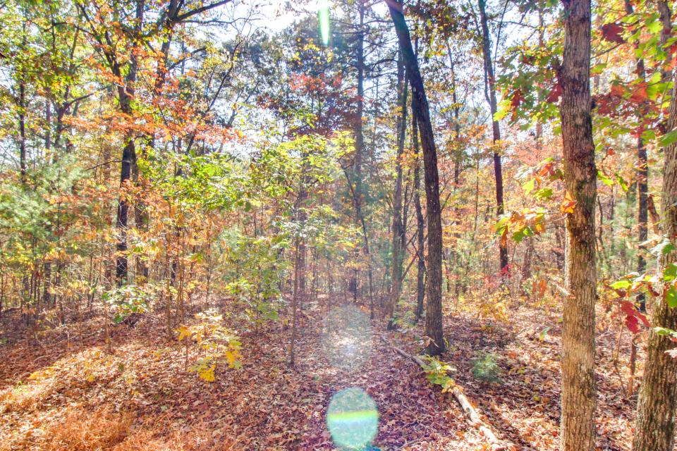 Birch Tree Cabin - Ellijay Vacation Rental - Photo 26