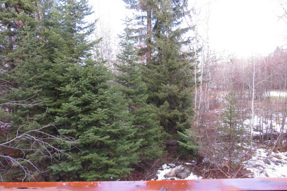 Mountain Safari Lodge - McCall Vacation Rental - Photo 21