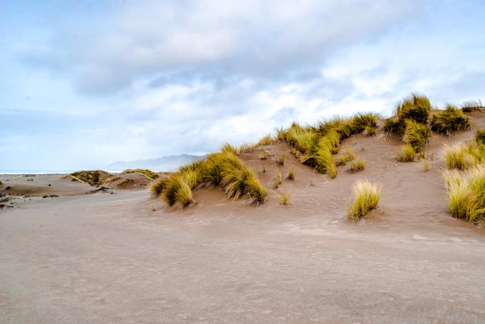 Mendocino Dunes - Dune Flower - Fort Bragg Vacation Rental - Photo 24