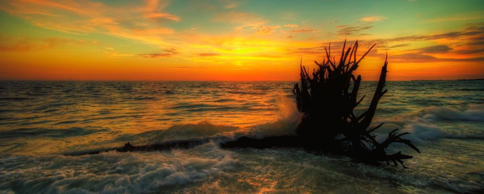 Forgotten coast,