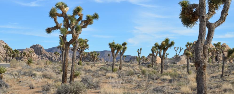 Coachella valley,
