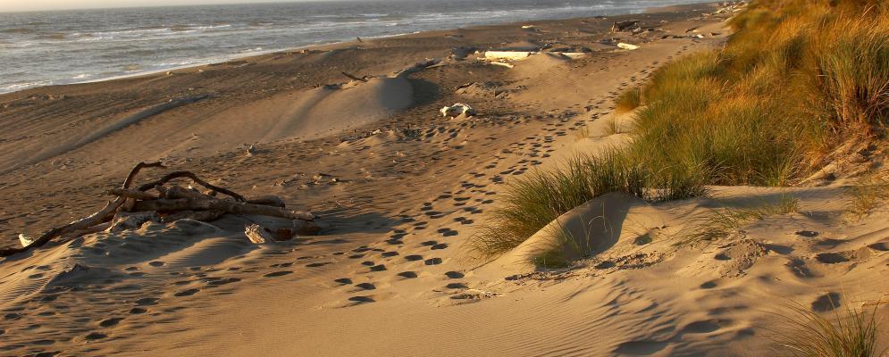 Bandon dunes,