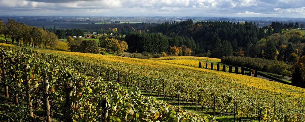 Oregon wine country,
