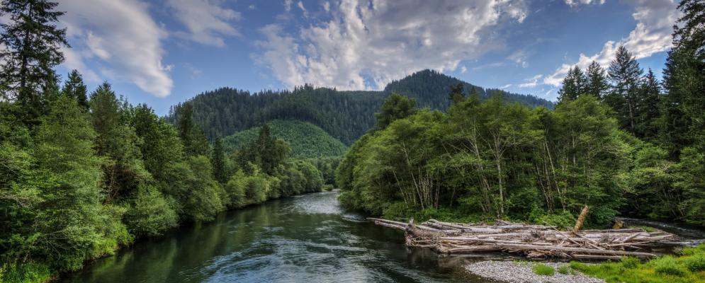 Mckenzie river,