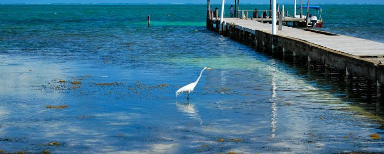 Caye caulker, Belize District