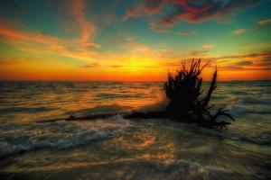 Forgotten coast